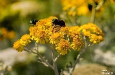 18-06-08_Korsika - Blumen 15