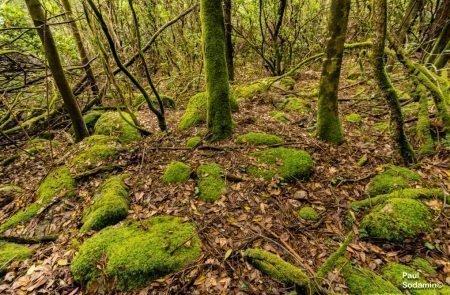 18-06-12_Korsika - Wald 1