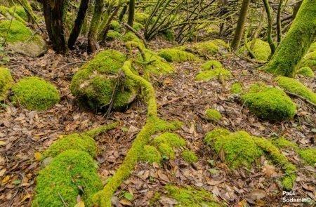 18-06-12_Korsika - Wald 11
