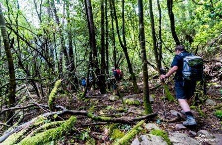 18-06-12_Korsika - Wald 3