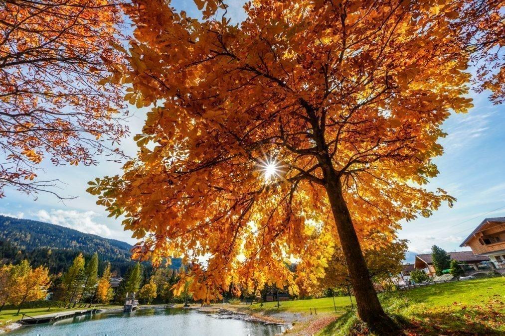 Elena u.Valentin – der Goldene Herbst