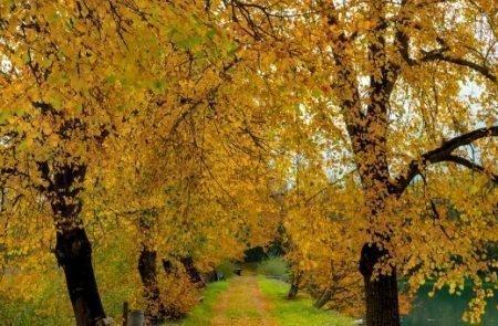 Herbst ©Sodamin (1)