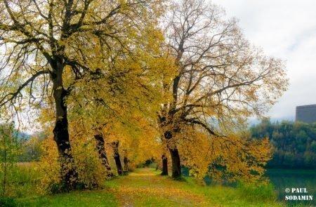 Herbst ©Sodamin (10)