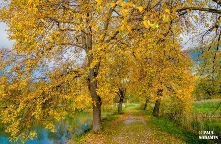 Herbst ©Sodamin (12)