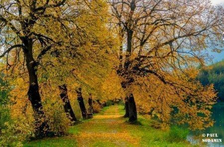 Herbst ©Sodamin (5)
