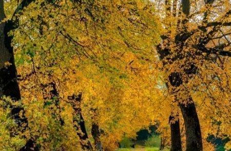 Herbst ©Sodamin (6)