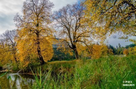 Herbst ©Sodamin (8)
