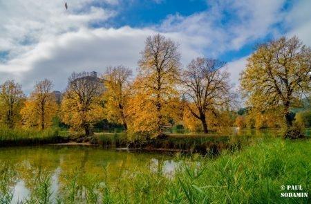 Herbst ©Sodamin (9)