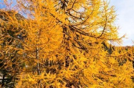 Herbst©Sodamin Paul (10)
