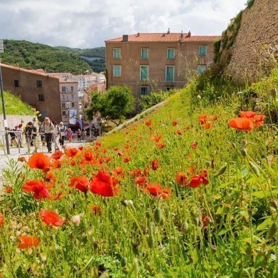 Korsika Blumen