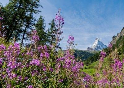 Matterhorn ©Sodamin Paul 14